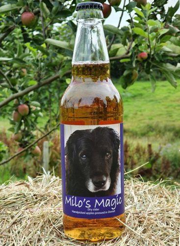 Milo's Magic