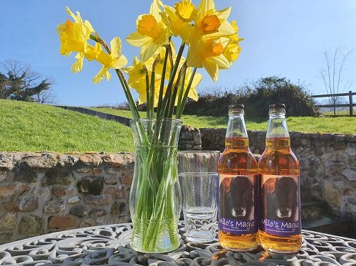Cider and daffodils