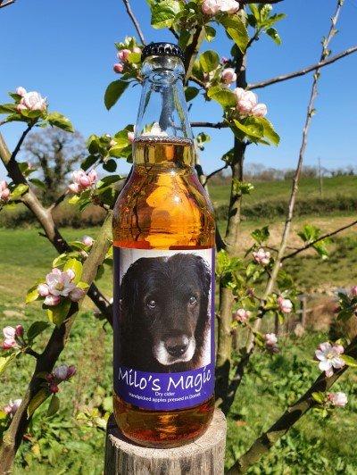 Milo's Magic Dorset craft cider