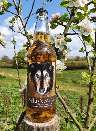 Millie's Magic Dorset craft Cider